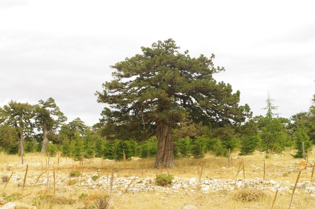 Ebenholz große Beute Bilder