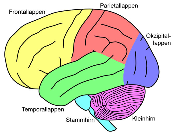 neurotiker definition